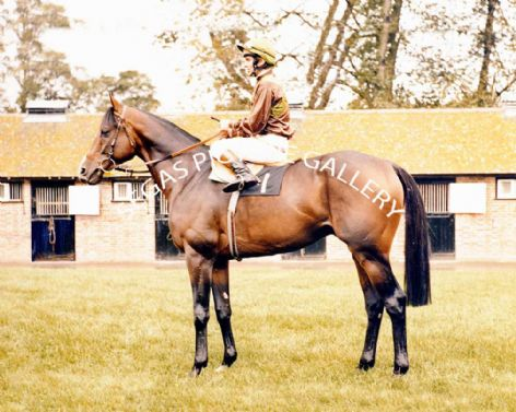 Racehorse Relkino with Jockey Willy Carson